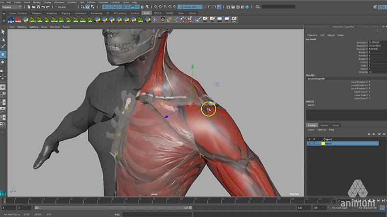 rig-musculatura